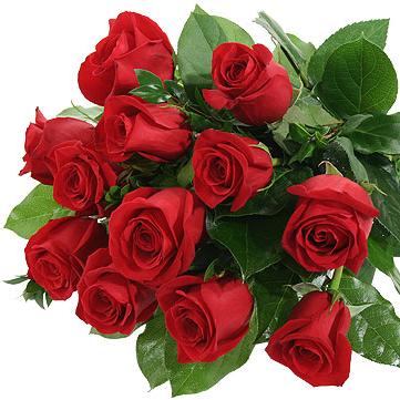 Kytica červených veľkokvetých ruží od 13ks 60cm