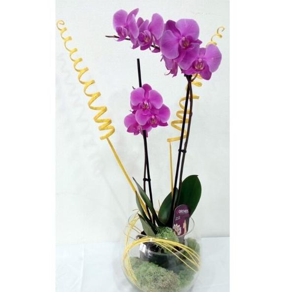 Orchidea s výzdobou 8