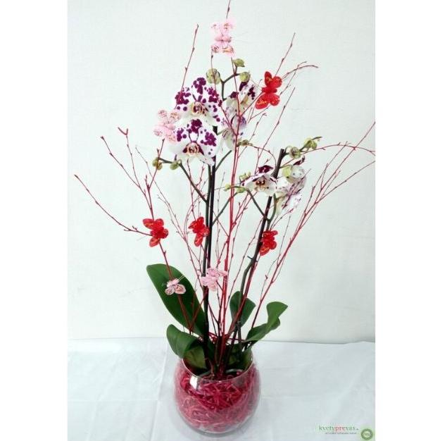 Orchidea s výzdobou 5