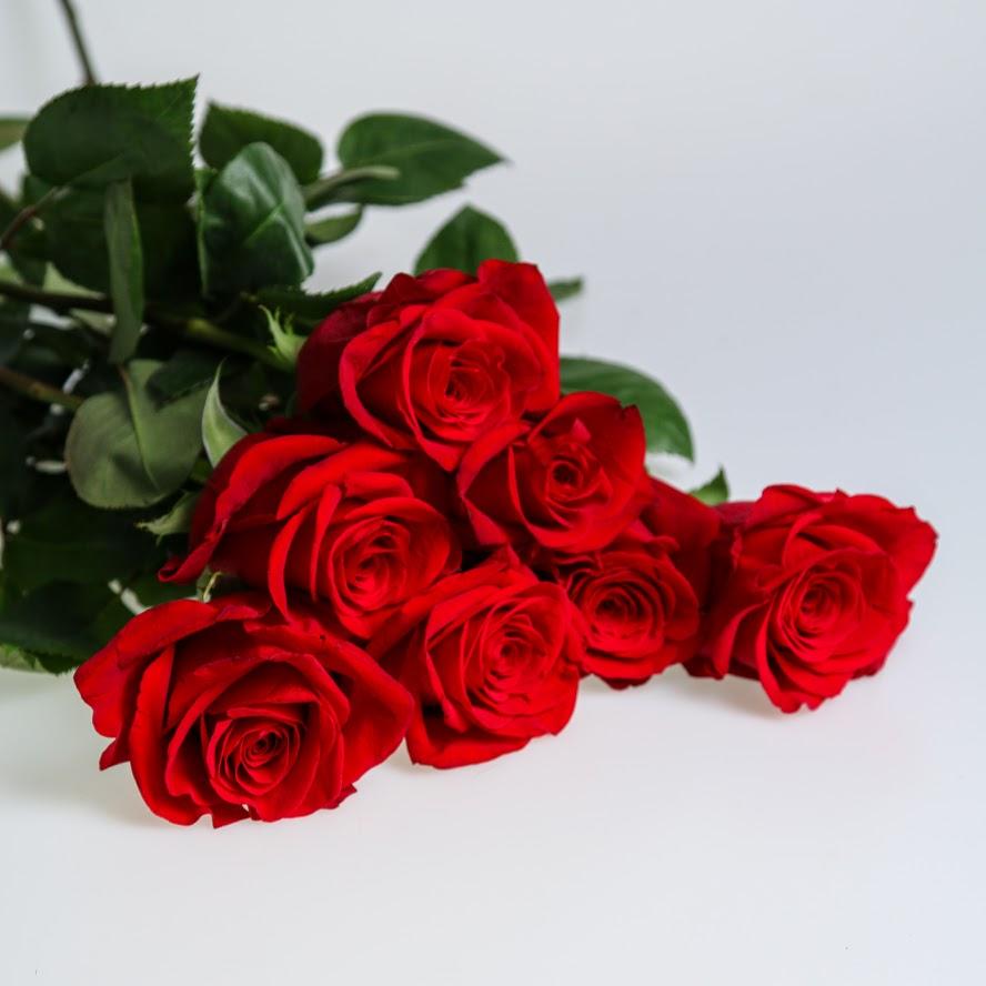 Ruža červená 1ks 60cm