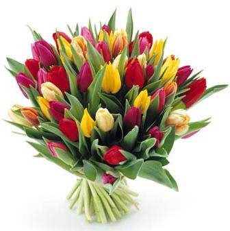 Kytica 45 farebných tulipánov