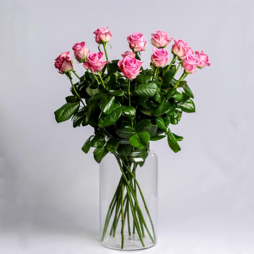 Ruža ružová Standard 60cm 1ks