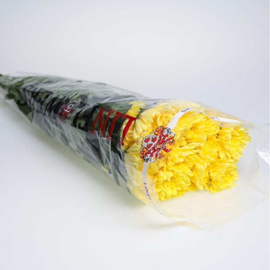 Chryzantéma trsová žltá balenie 5ks