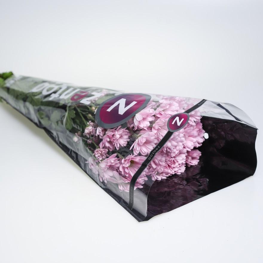 Chryzantéma trsová ružová balenie 5 ks